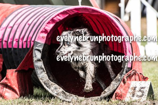 Evelyne Brun photographe chien