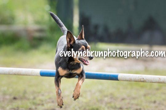 photographe chien