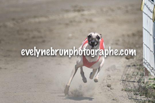 Evelyne Brun, photographe course lévriers, championnats du Monde de Racing 2016
