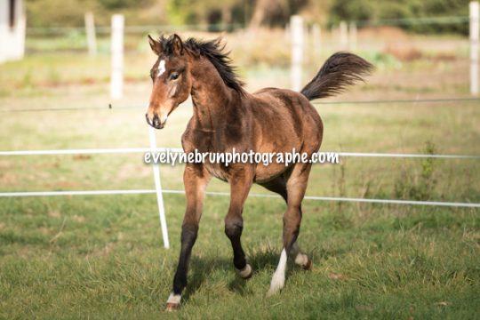 photo de votre cheval