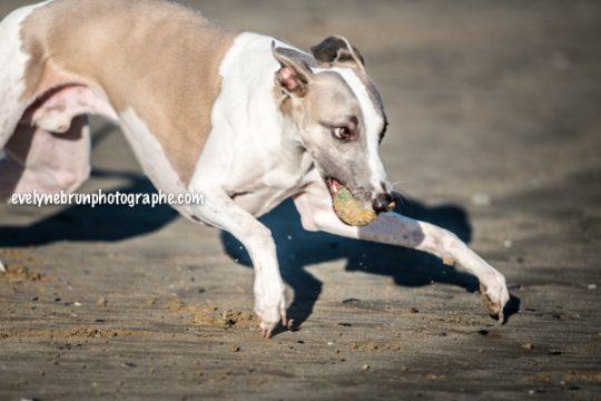 Evelyne Brun photographe animalière, chiens, chevaux